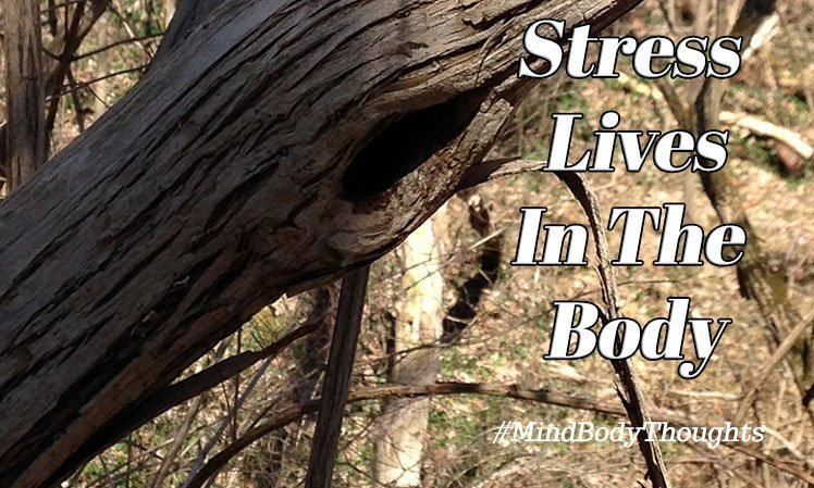 Stress Lives In The Body
